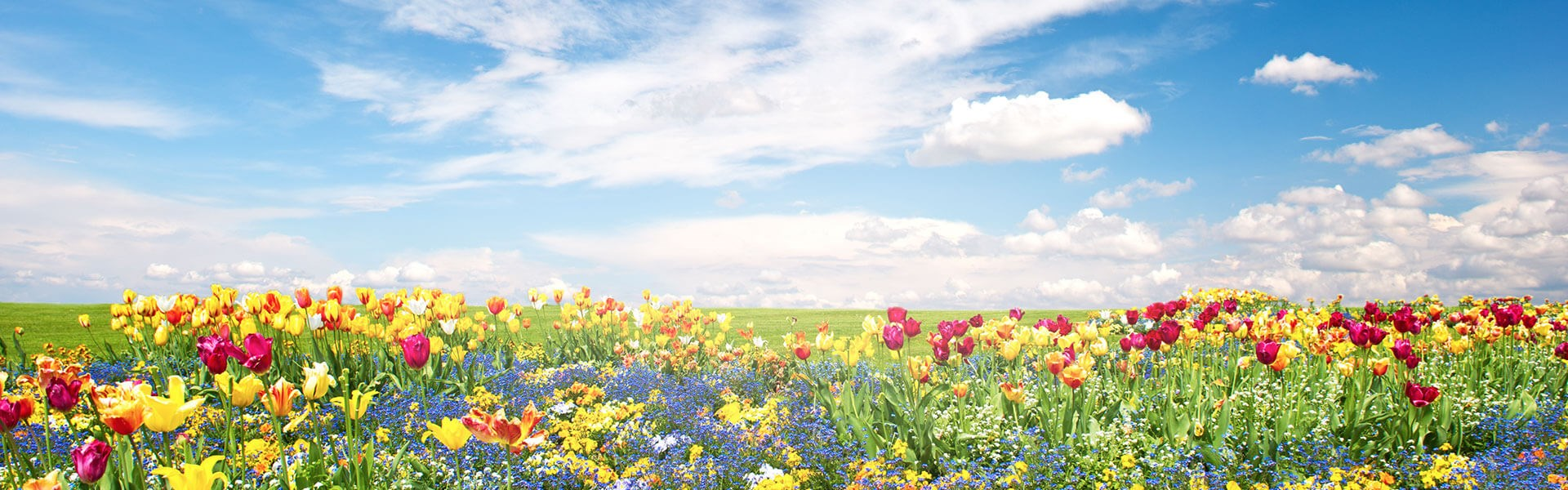 Wide angle of field of summer flowers with sunny blue sky