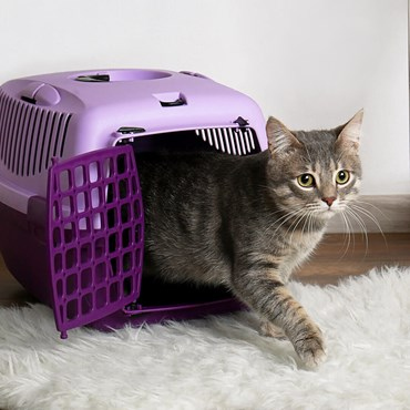 Cat coming out of purple carry basket