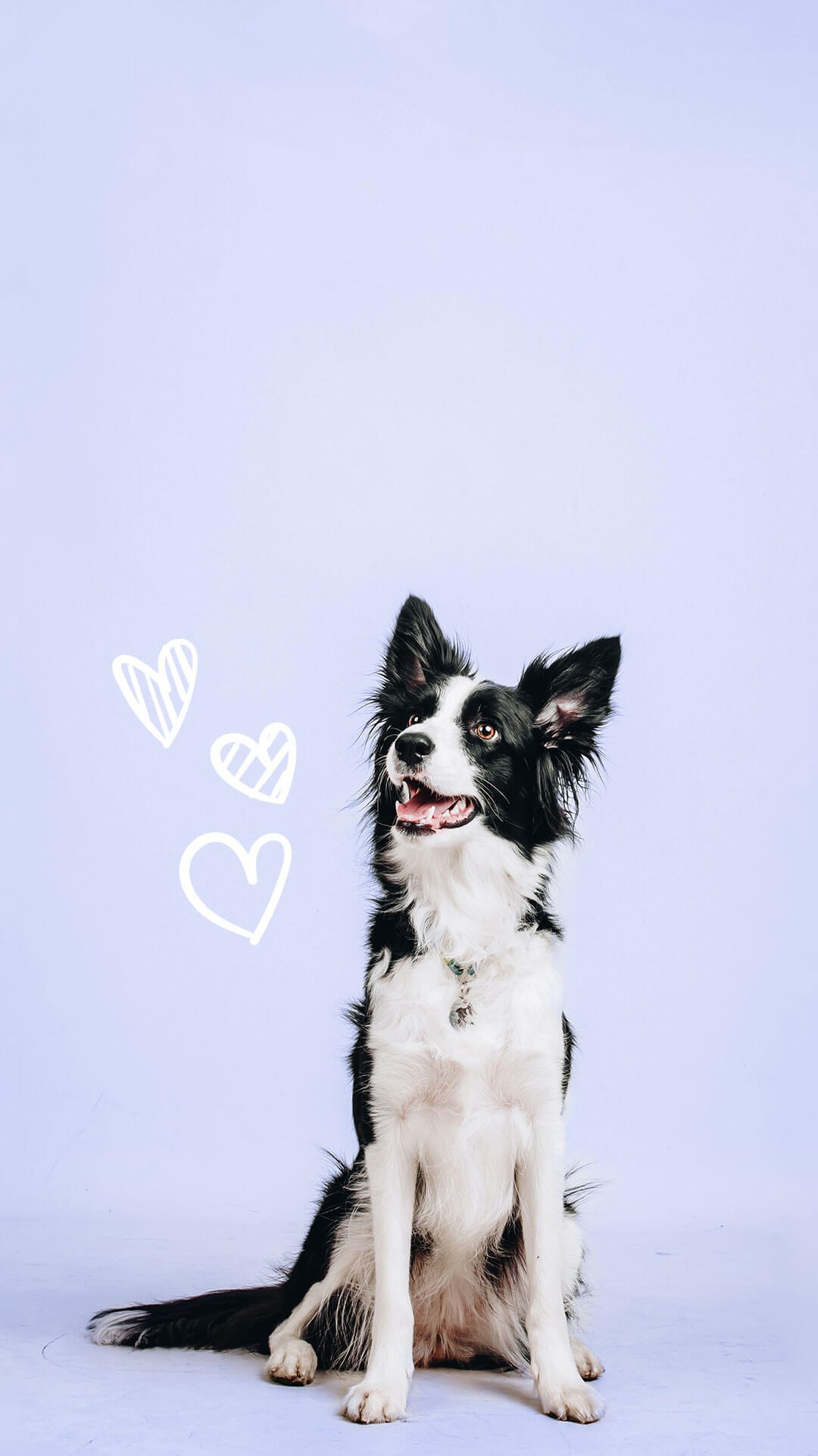 Dog with hearts
