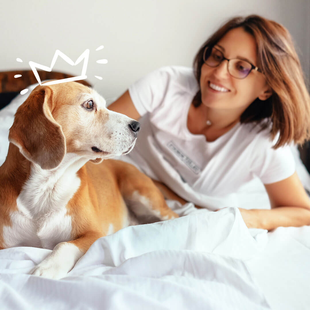 Women looking at her beagle with a crown on