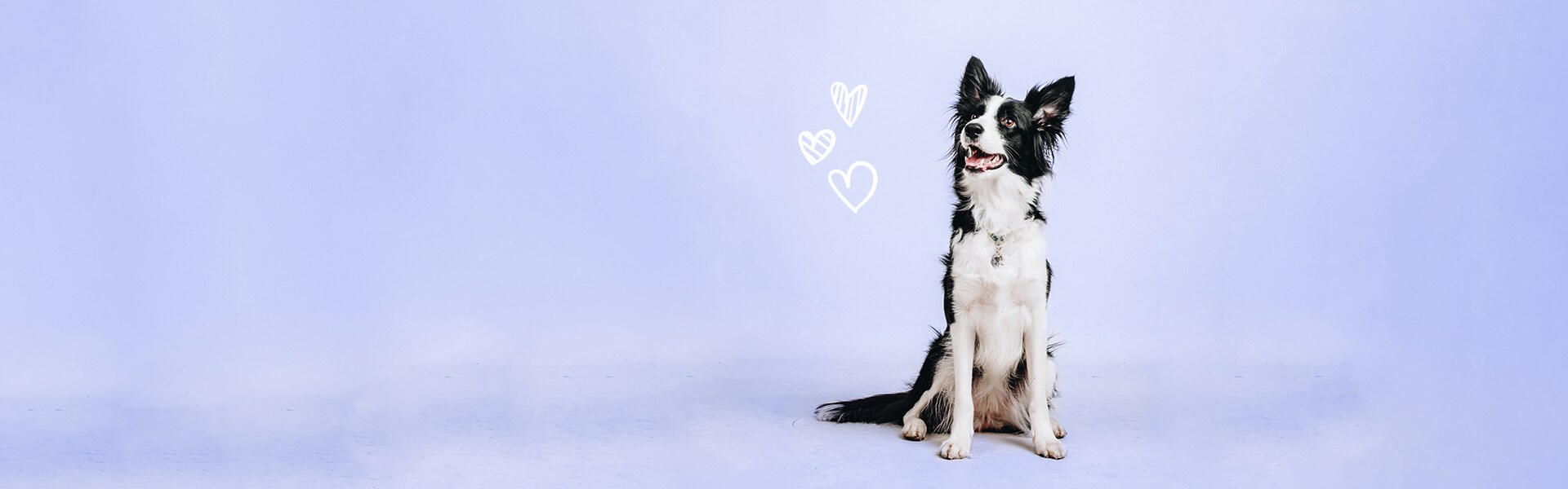 Purple background with dog and hearts