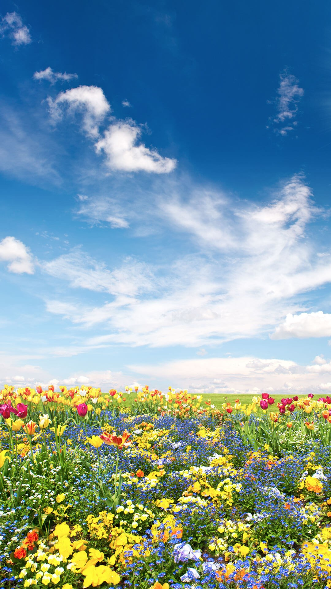 Portrait of field of summer flowers with sunny blue sky
