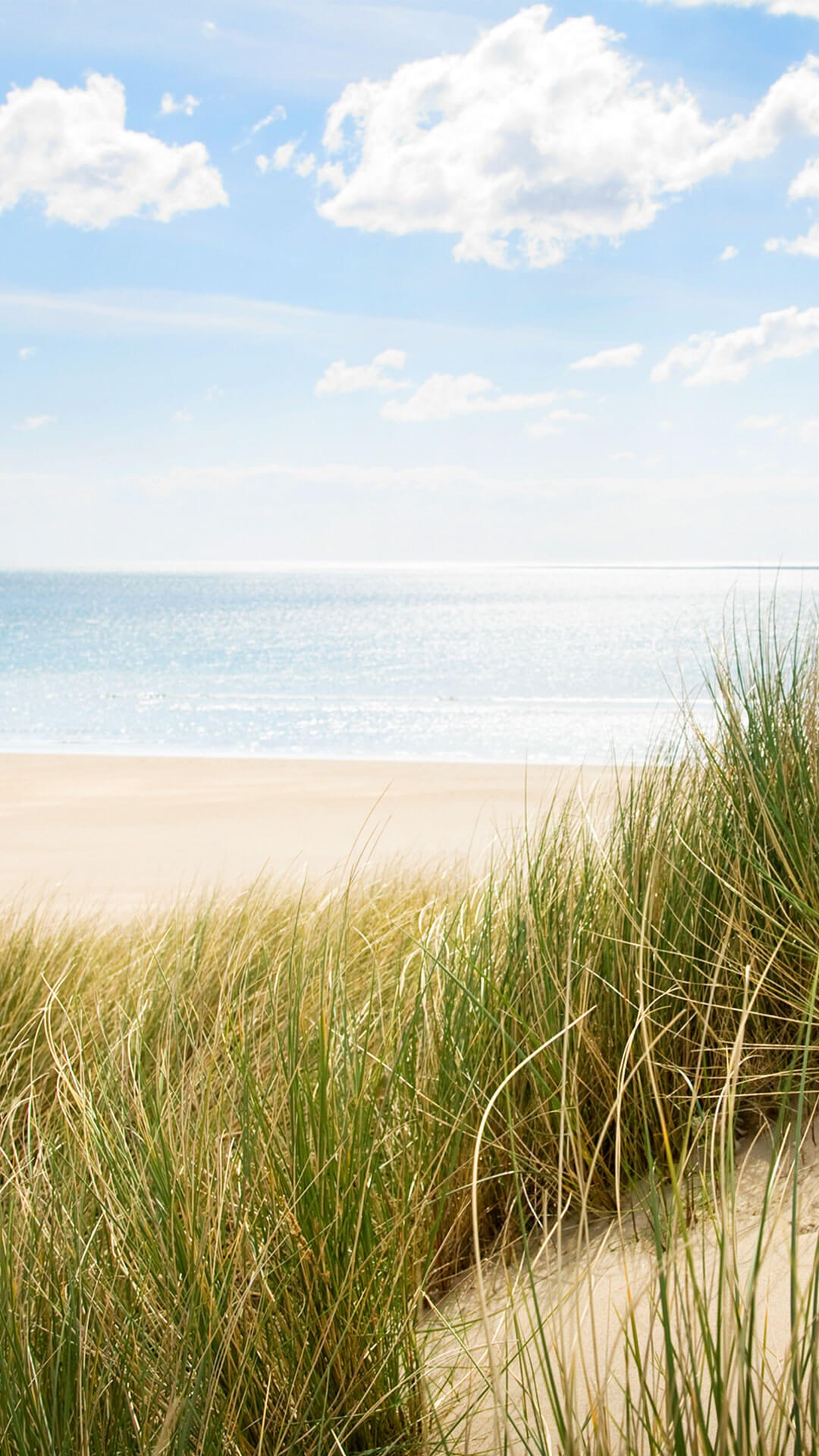 Portrait of sandy beach with green grass flowing in a coastal breeze