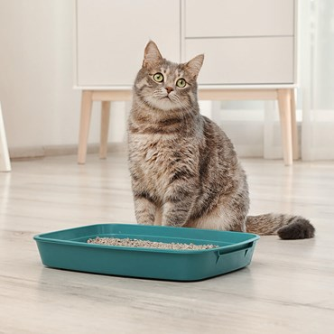 Cat next to litter tray